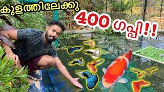 കടയിലെ മുഴുവൻ ഗപ്പിനേം മേടിച്ചു!!! | Bought 400 Fishes