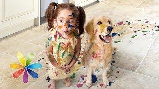 Топ-5 собак для ребенка - Все буде добре - Выпуск 407 - 11.06.2014 - Все будет хорошо(Давно мечтаете о появлении четвероногого друга в своем доме, но боитесь делать это из-за маленького ребенка..., 2014-06-11T16:14:06.000Z)