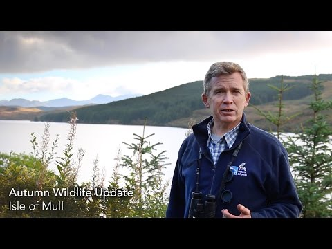 Autumn Wildlife Update, Isle of Mull
