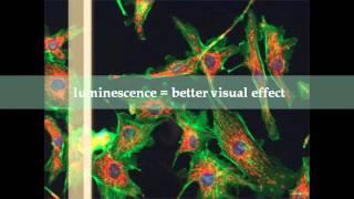 Fluorescence & Phosphorescence