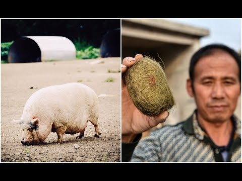 After Finding This Mysterious Object In His Pig's Gut, A Chinese Villager's Life Changed Forever