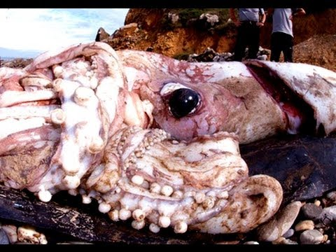 how to make a giant squid