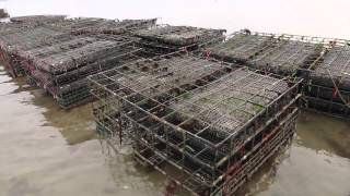 Standish Shore Oyster Farm