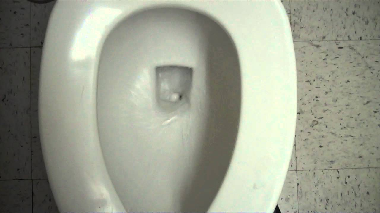 Unlock Car Door >> Eljer Toilet at PetSmart - YouTube