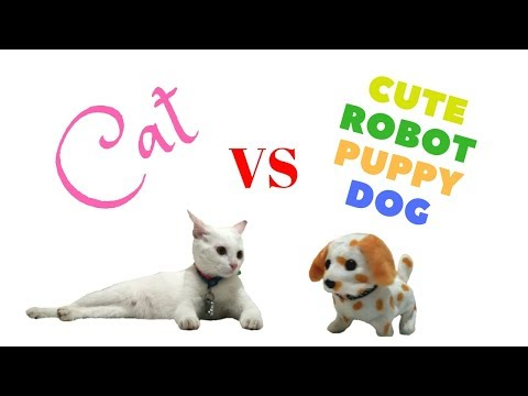 Cat vs Cute Robot Dog