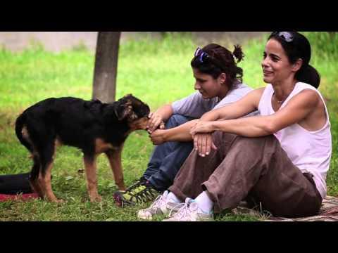 Storie Martesane: Rifugio di Segrate - Lega Nazionale per la Difesa del Cane