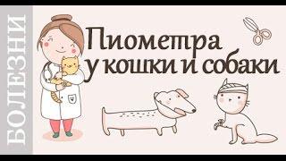 Пиометра у кошки, собаки. Симптомы и лечение. Советы ветеринара