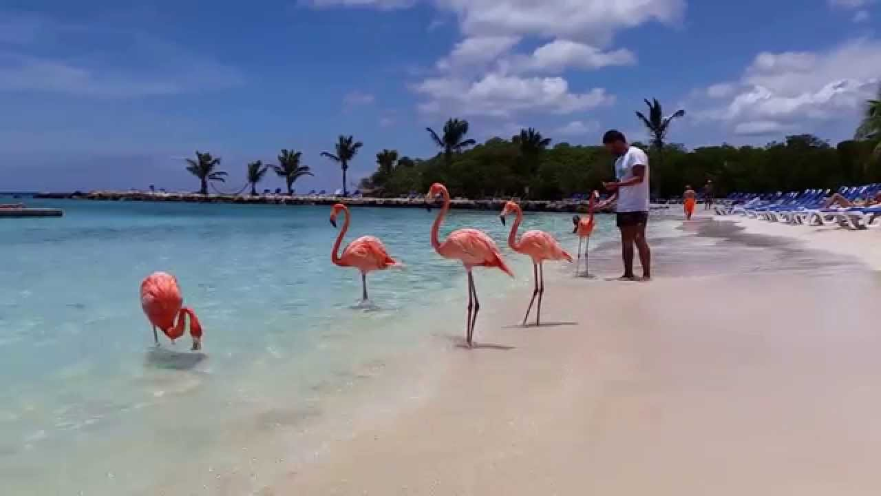 how to live and work in aruba