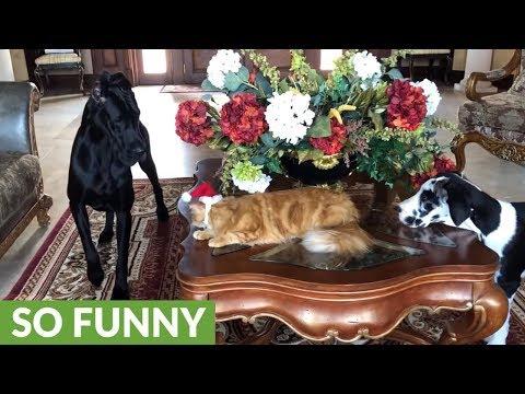 Pets get ready for their Christmas card photos