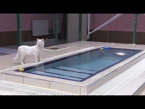 """Van kedileri için """"özel havuz"""""""