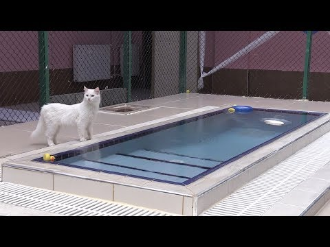 Van kedileri iin 'zel havuz'