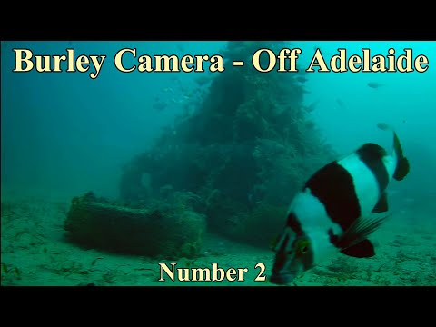 Burley Camera Off Adelaide 002