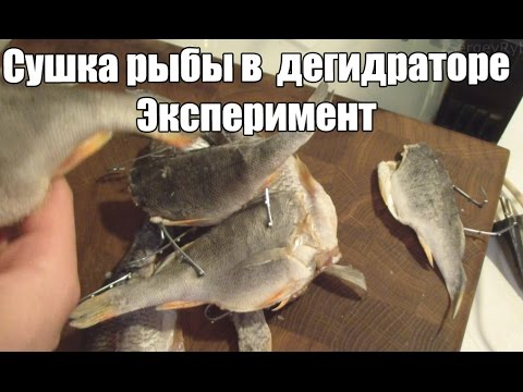 Сушка речной рыбы в самодельном дегидраторе. Эксперимент.
