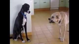 1  Dog VS  other Dog  fighting over a bone ! Драка собак из за кости !