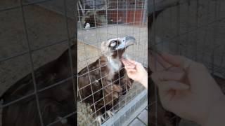 БЕЛОГОЛОВЫЙ СИП в Липецком зоопарке