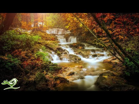 Relaxing Celtic Music: Sleep Music, Flute Music, Meditation