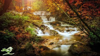 Download Beautiful Relaxing Music - Peaceful Harp & Flute Music with Birds Singing Mp3 and Videos
