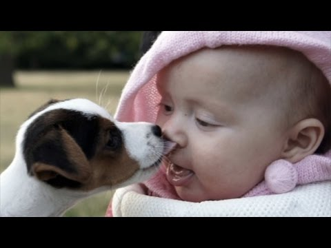 Animals and babies licking and kissing – Funny and cute compilation