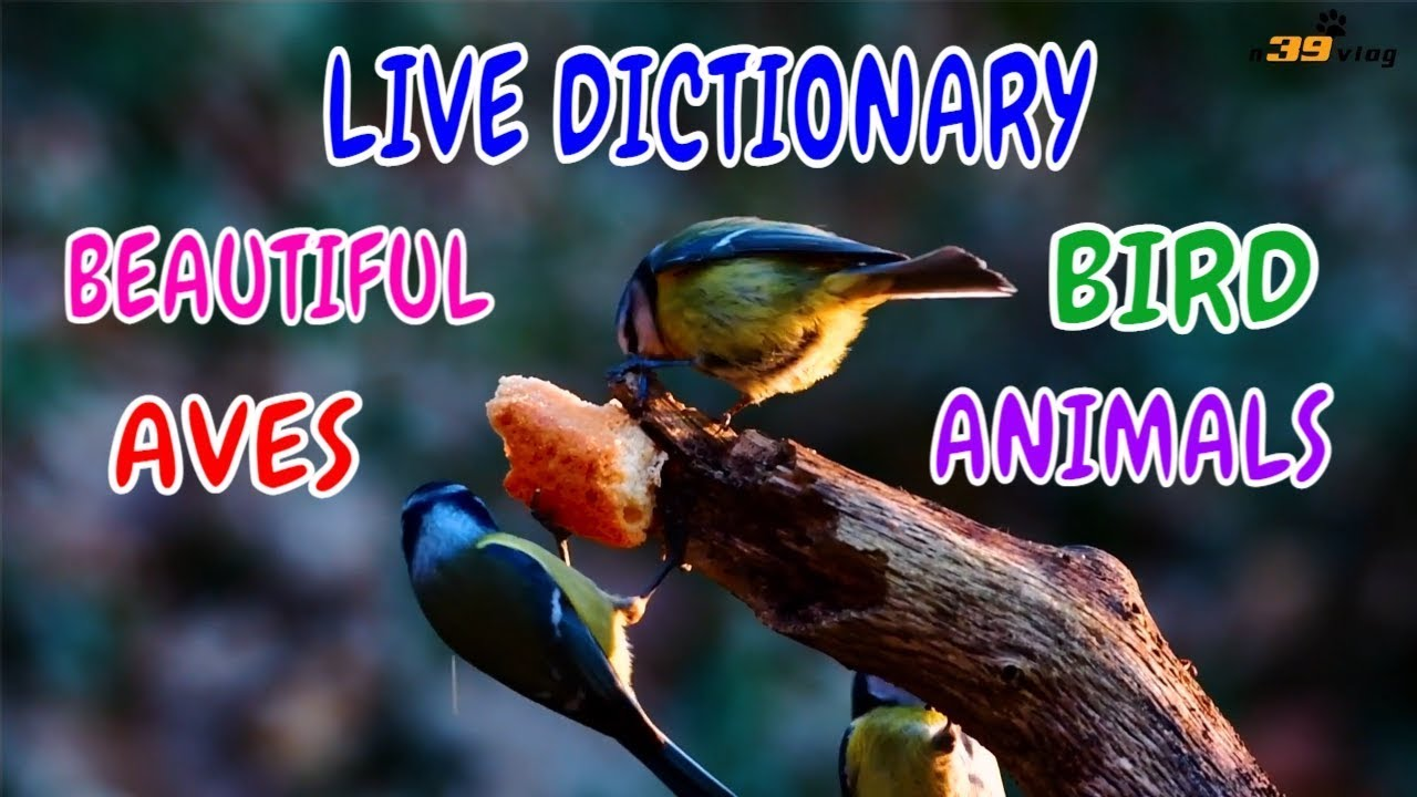LIVE DICTIONARY Special Episode - BIRD | CHIM | OISEAU | VOGEL | PÁJARO | 鳥 | 새 | 鸟 | n39 vlog