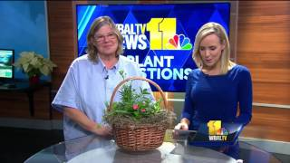 Video: How to take care of cactus plants