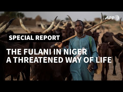 PART III - The Fulani in Niger: climate change threatens way of life of nomadic herders | AFP [2019]