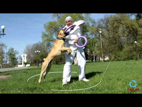 PULLER interactive device for dogs. New Video