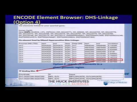 ENCODE Element Browser and the 3D Genome Browser - Yanli Wang