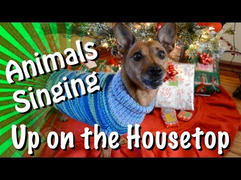 Animals of YouTube sing Up On The Housetop