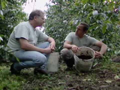 Dirty Jobs (coffee Grower Using Organic Farming)