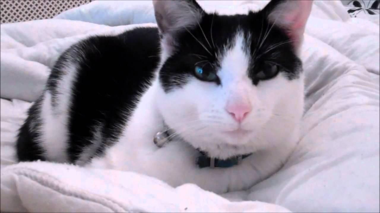 koopa cat movie