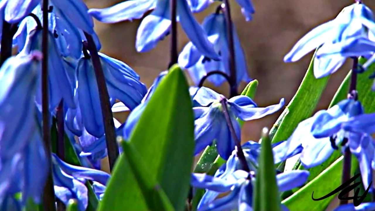 Spring Garden Flowers Blooming 2012 Youtube Youtube