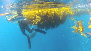 Paddy Hopping and Spearfishing Off Orange County California