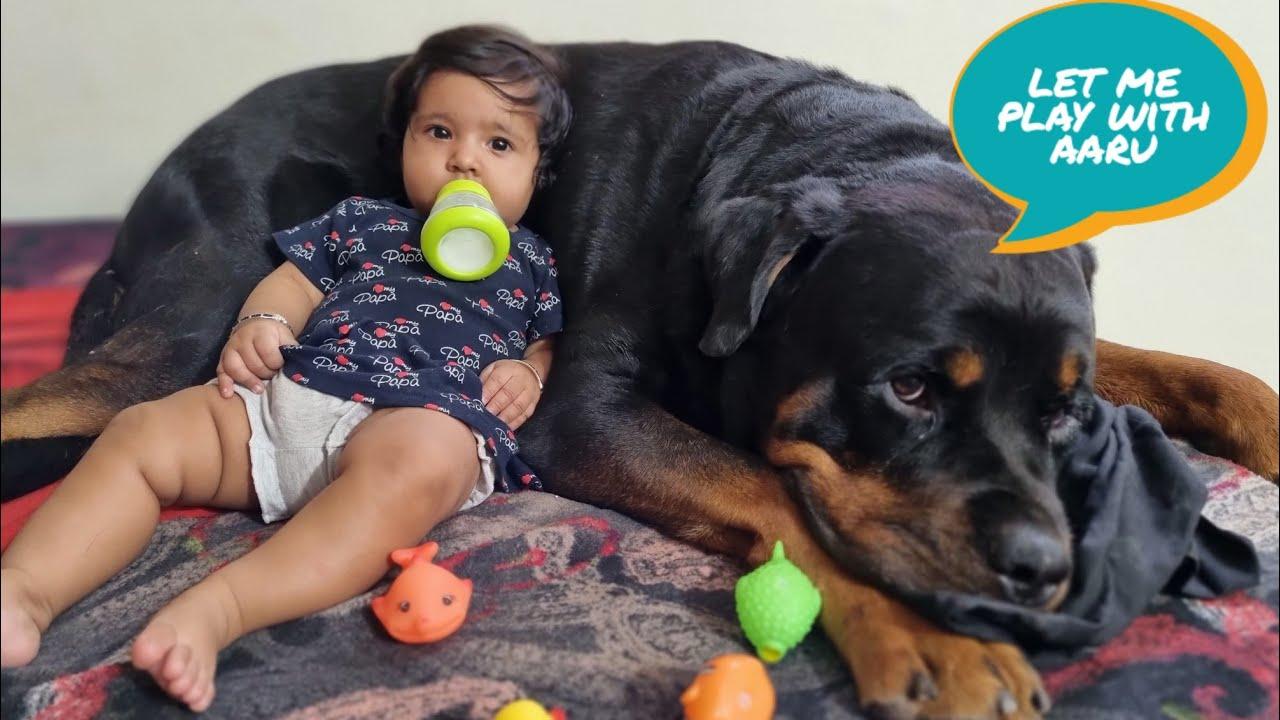 Jerry helps aaru to sleep   cute dog video