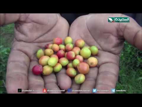 مشروع طموح لزراعة أكثر مليون شجرة بن في بني حماد (18-10-2019)