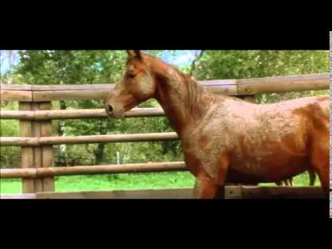 Lhomme qui murmurait à loreille des chevaux 2 streaming