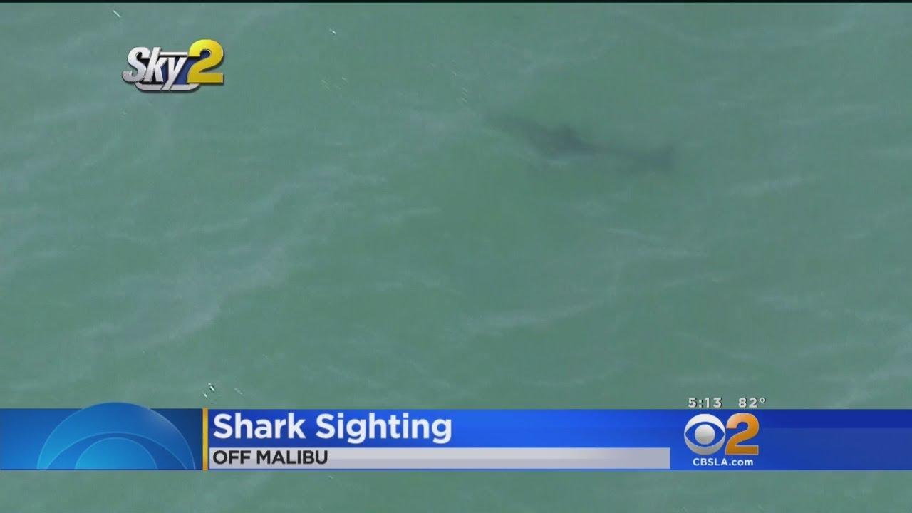 Shark Sighting Off The Coast Of Malibu