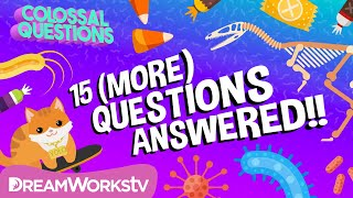15 (More) Quick Questions Answered!! | COLOSSAL QUESTIONS
