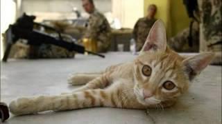 Афганистан! В жизни, всё же любовь Войну преград побеждает вновь!