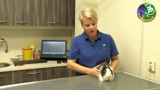Gebit van het konijn nader bekeken