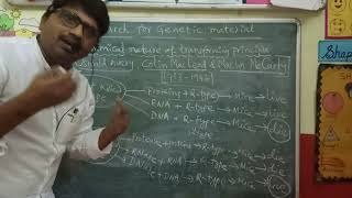 Search for genetic material (Part-2) - Oswald Avery et al  experiment by Ravinder sir in Hindi YouTube Videos