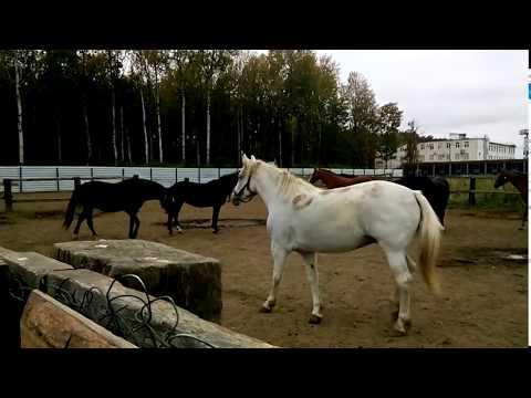 Лошадки из конного клуба, Ипподром УВД г.Владимир