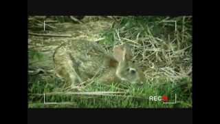 שפן ארנב- רשות הטבע והגנים