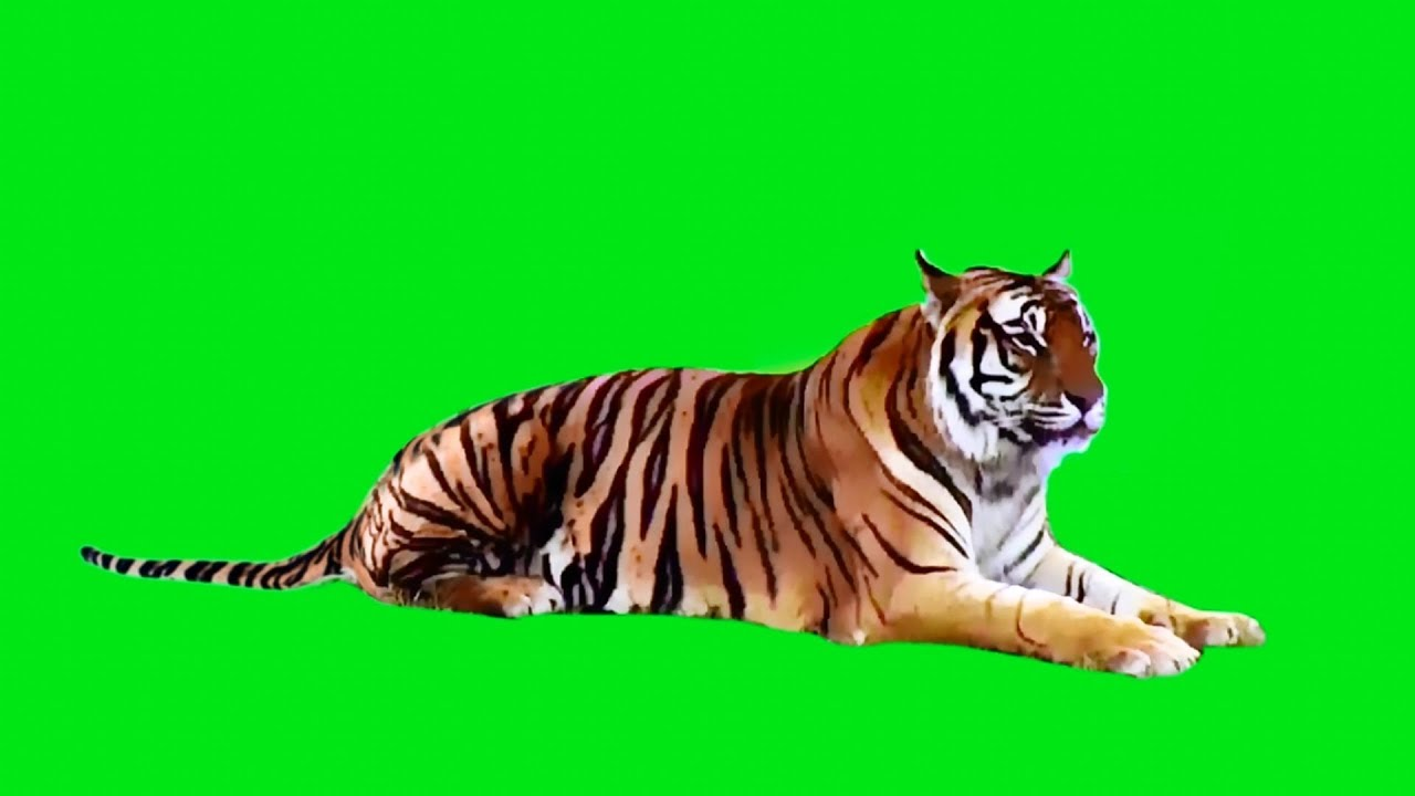 real tiger on green