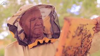 О жизни пчел. Видеоурок.