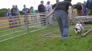 Weight Pull at The Clondulane Country Fair, Co. Cork, Ireland