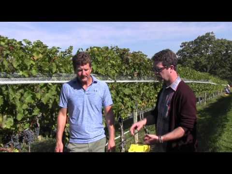 Lecture 8: Virginia Vineyard View,  2016 Harvest