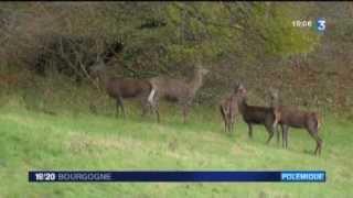Une polémique sur la chasse à courre en Bourgogne