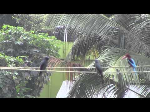 Picnic of birds- Nilgiri Biosphere