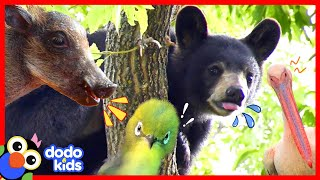 Baby Rhino Gets Silly With His Favorite Goat And 30 Minutes Of More Wild Animal Stories | Dodo Kids