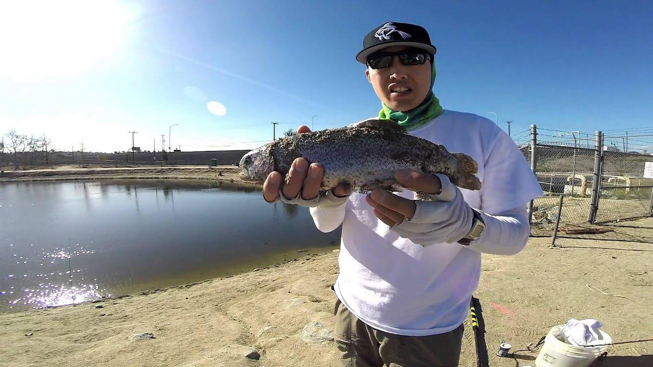 Santa ana river lakes trout fishing with lip ripperz for Santa ana river lakes fishing